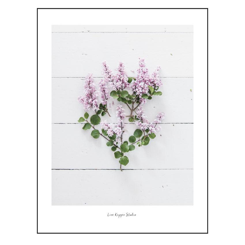 Foto Plakat - Syren - Lise Kryger Studio