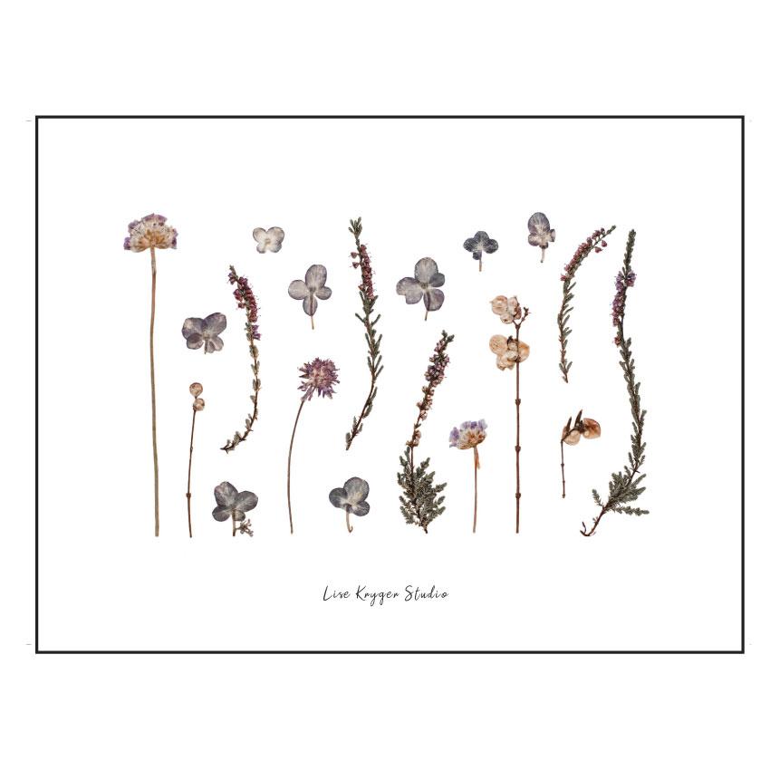 Plakat Sensommerblomster - Lise Kryger Studio